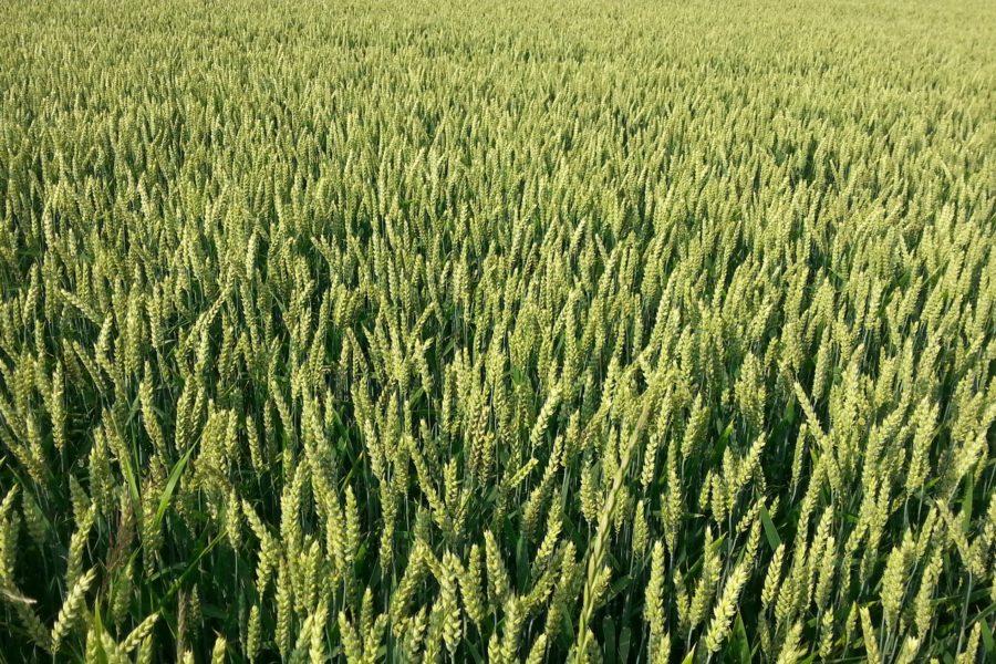El Big Data se impone en el mundo agrícola