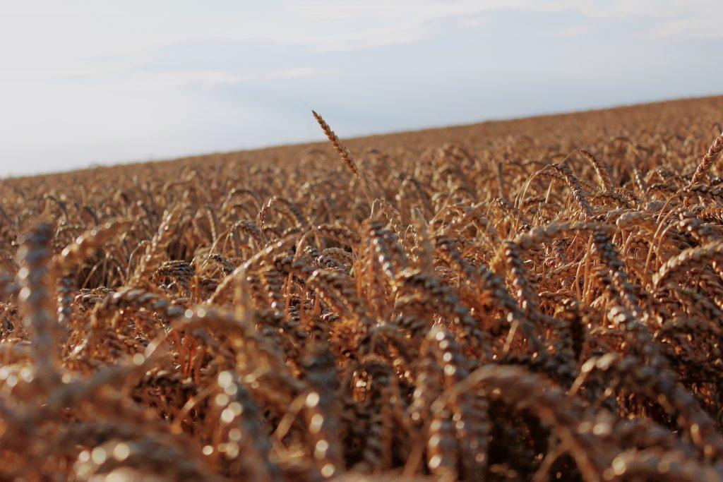 ¿Qué cereales y granos se producen en mayor medida?