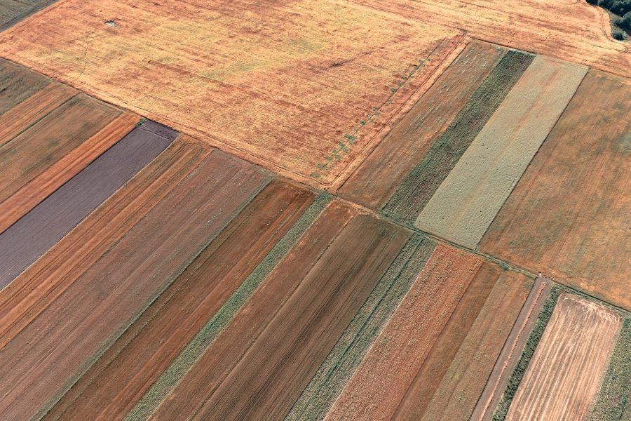 Cómo conocer el estado de tu suelo