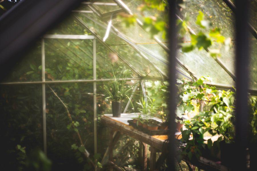 Por qué sí (y no) elegir un invernadero