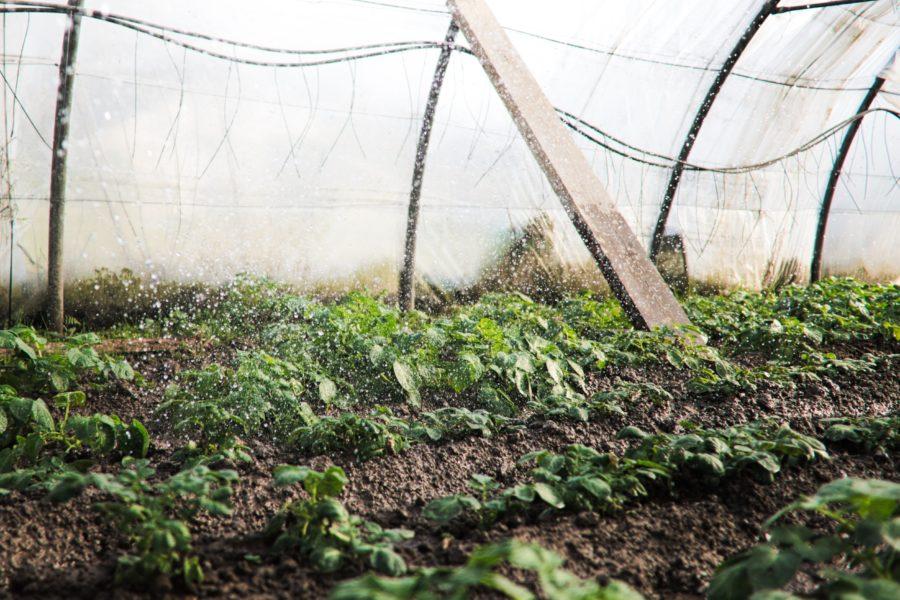 El reto alimenticio en las próximas décadas