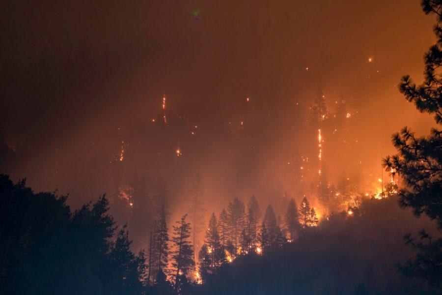 Ayuda a prevenir incendios forestales en verano