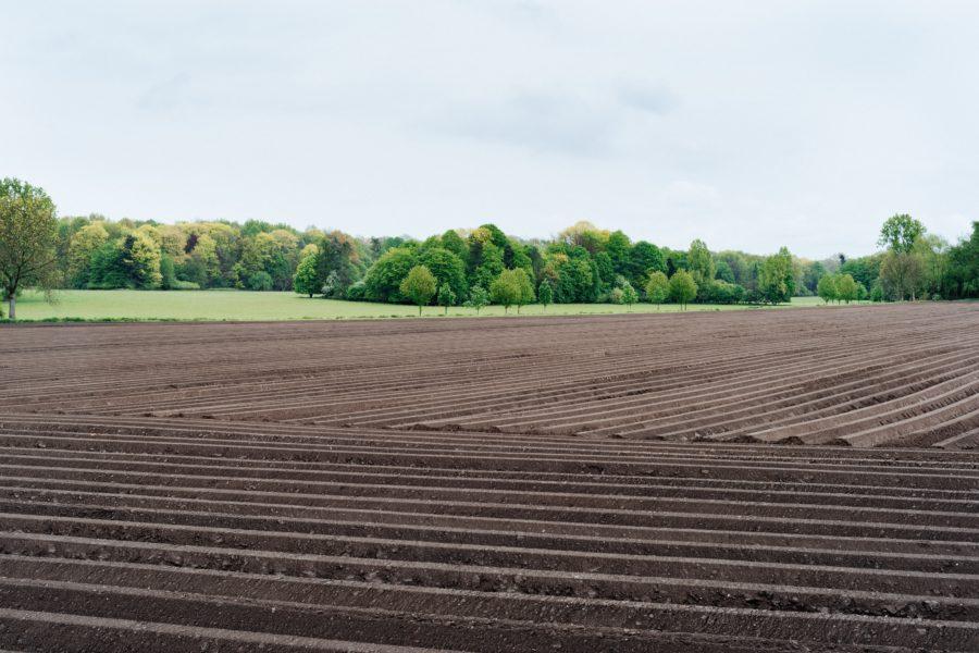 La agricultura intensiva podría ser la solución al reto alimentario