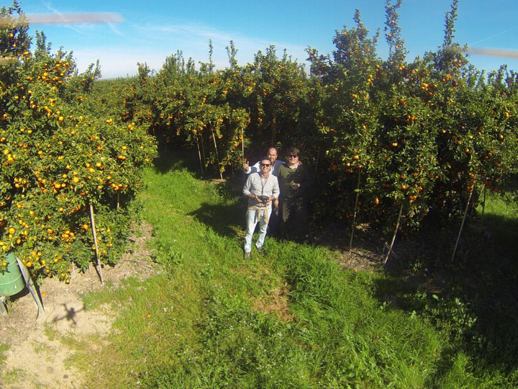 Trabajo en el Campo, usando Drones para inspeccionar plantación de naranjas, febrero 2020