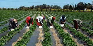 Las oportunidades agrícolas en Senegal