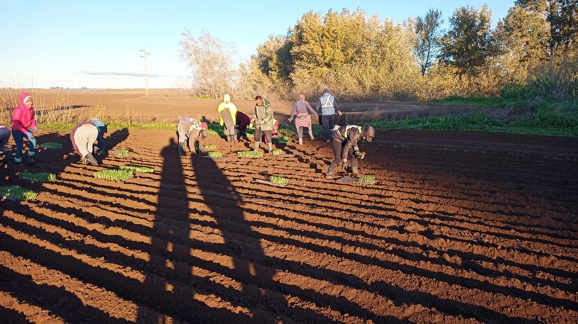 Agricultura ecológica en el marco europeo